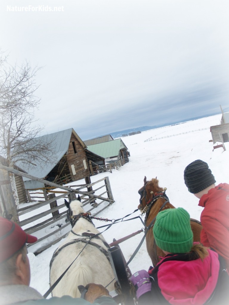 sleigh ride nature for kids 3