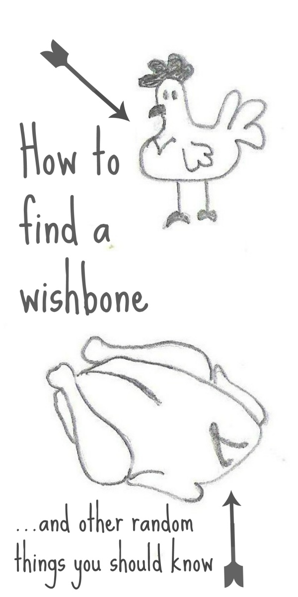 how to find a wishbone and other random things you should