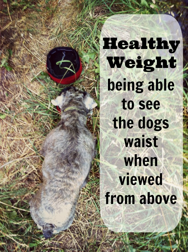 healthy dog weight