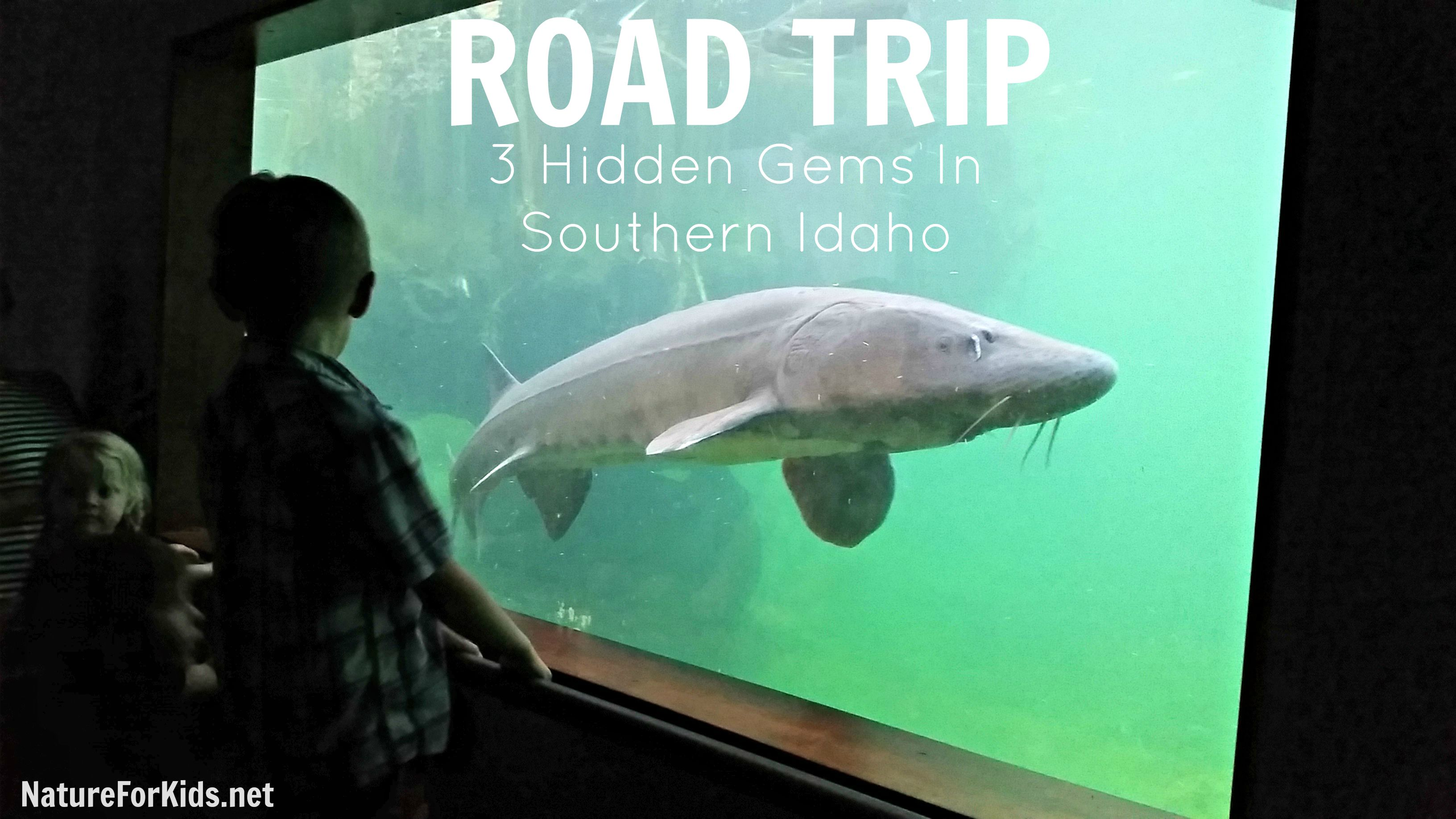 Idaho Road Trip With 3 Unique Stops