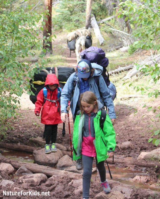 backpacking with goats and kids high uintas utah 2