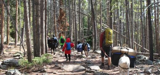 backpacking with goats and kids high uintas