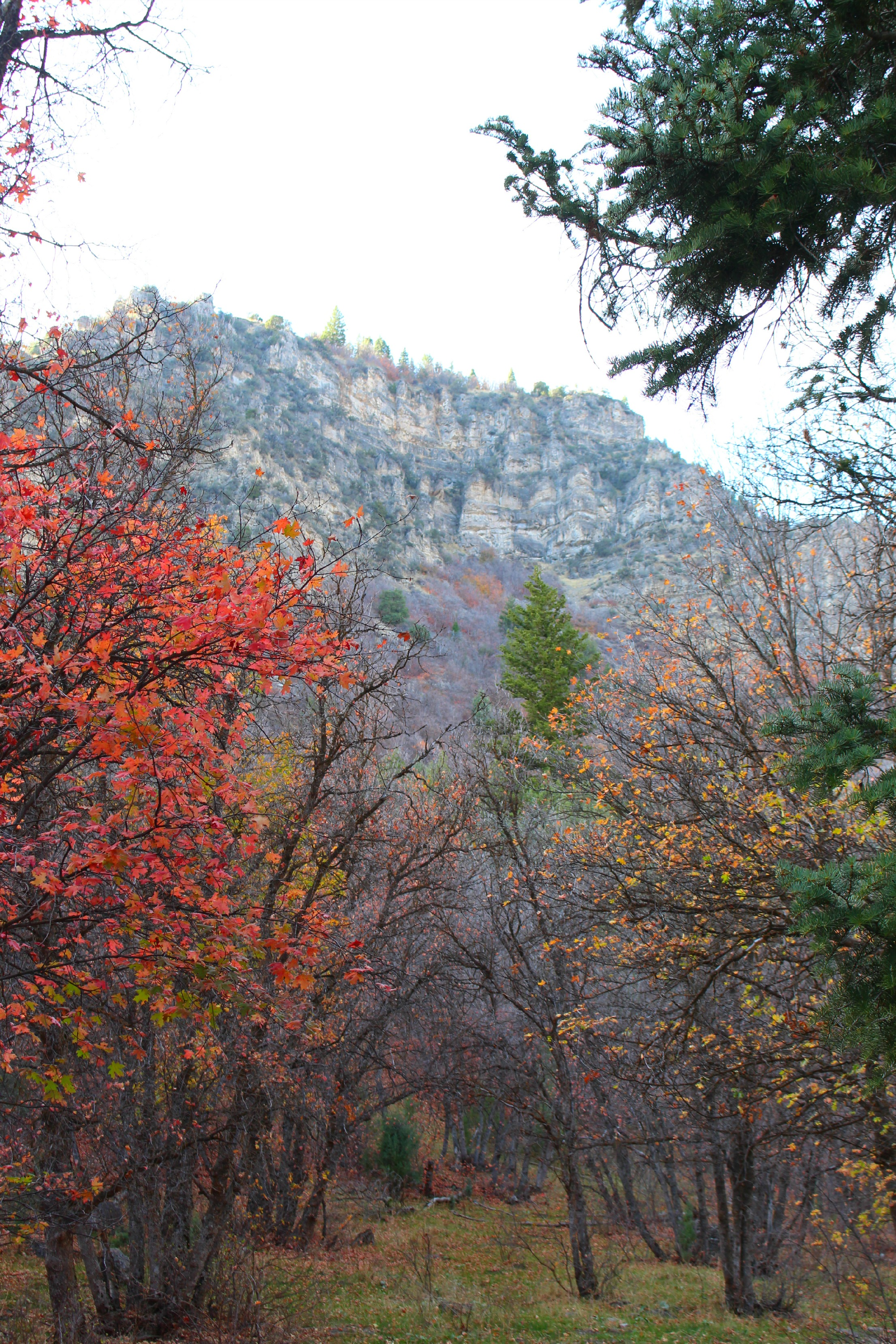 Blacksmith Fork Canyon – An All Inclusive Recreation Area | Nature For Kids