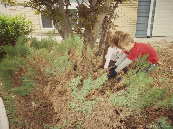 15 Outdoor Jobs For Kids To Do This Spring Nature For Kids
