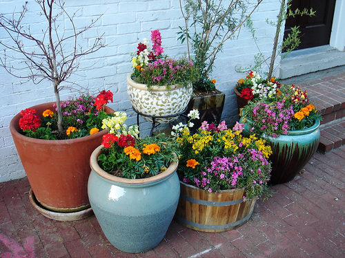 container gardening  nature for kids, Beautiful flower